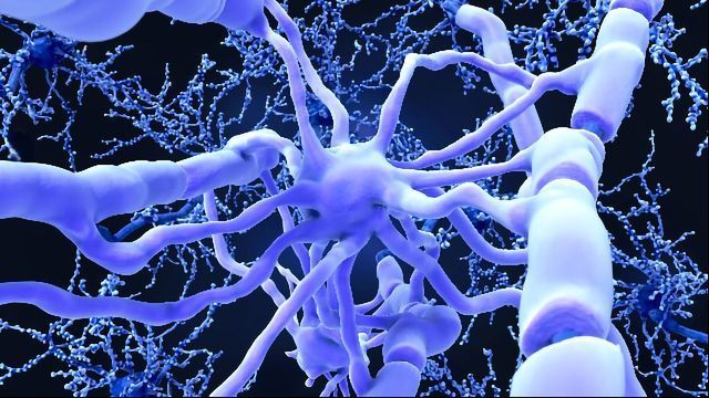 New Alzheimer's Approach Helps the Body To Fight Amyloid