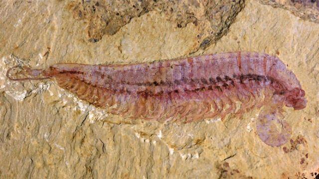 Five-Eyed Fossil Reveals Arthropod Origin