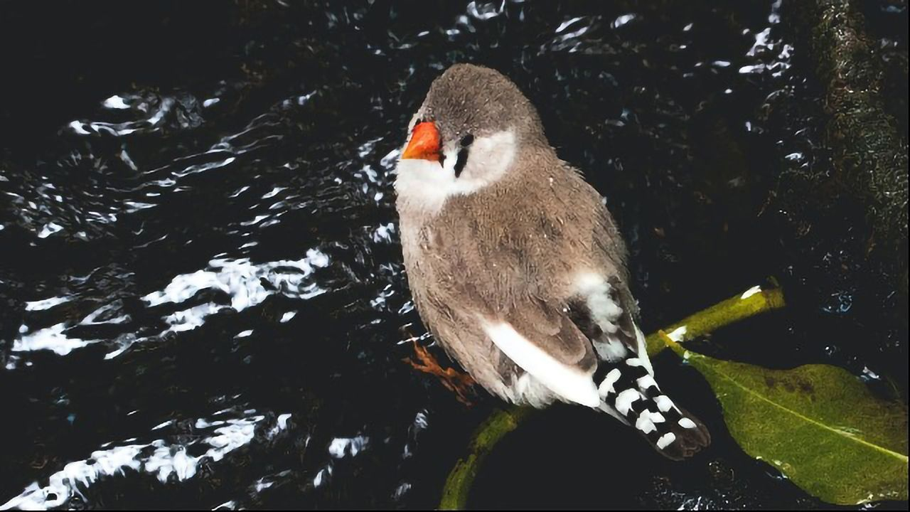 How the Bird Brain Connects to the Bird Gut