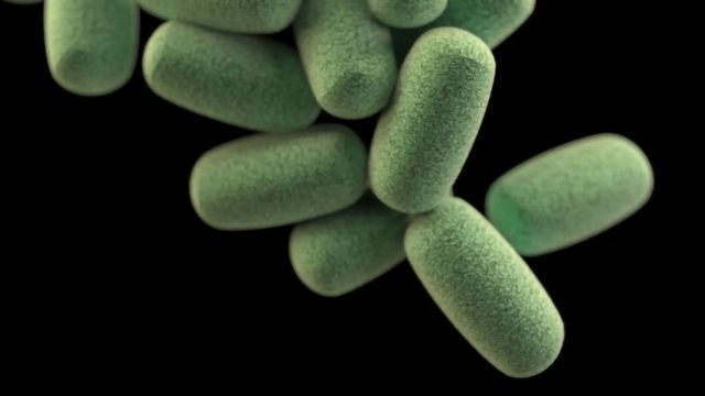 Secret Behind Protective Bacterial Shield Revealed