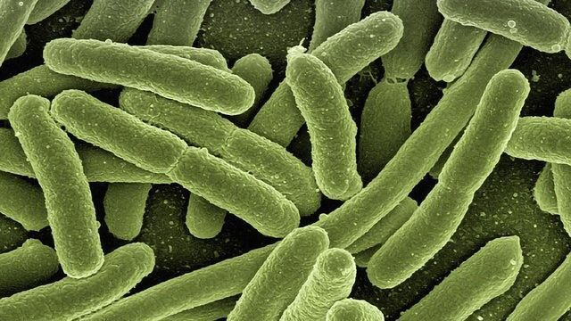 Connection Made Between Household Chemicals and Gut Microbiome