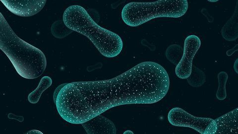 How Do Microbiota Transplants for Autism Affect Our Metabolome?
