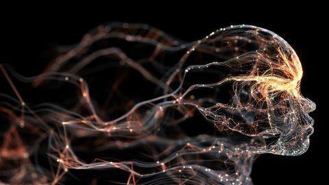 """Memory """"Fingerprints"""" Reveal How the Brain Is Organized"""