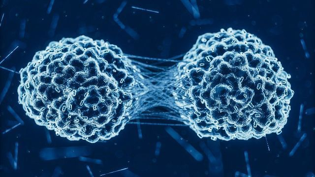 Ovarian Cancer Cells Cooperate To Metastasize