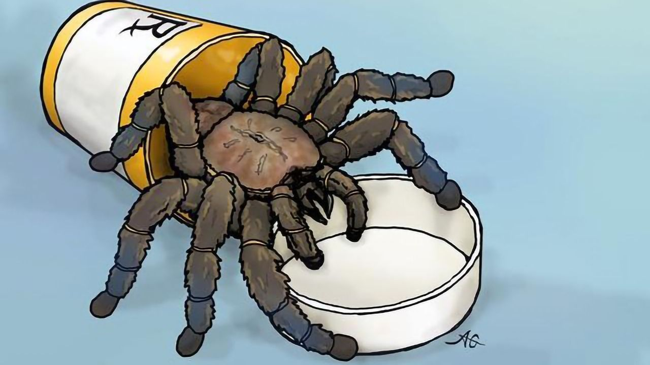 Tarantula Toxin Could Help To Design Drugs for Chronic Pain