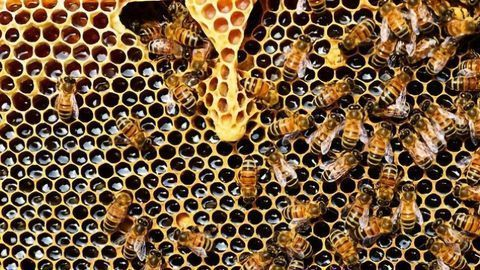 Insecticide That's Deadly to Bees Detectable in Honey