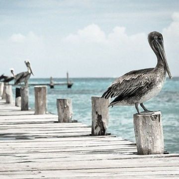 US Clean Air Policies To Protect Humans Are Saving Birds Too