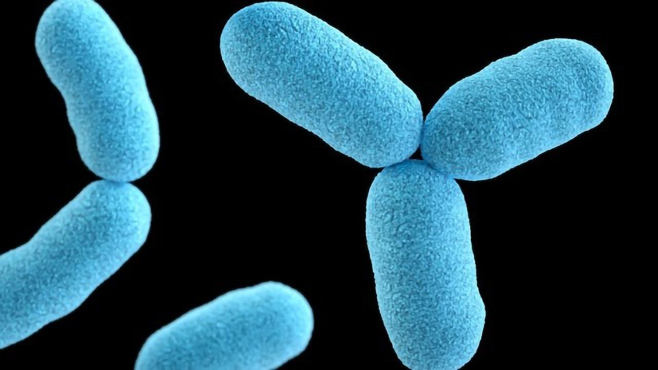 Understanding How TB Bacteria Feed Could Help To Starve Them