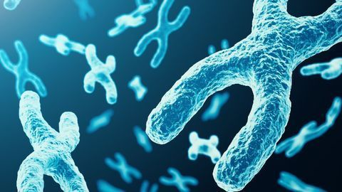 Mechanisms of Telomere Protection Are Unique in Stem Cells