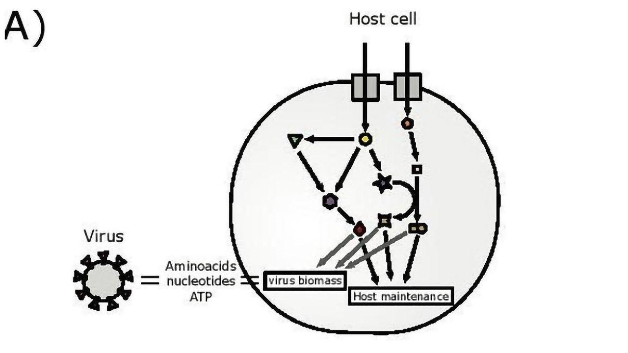Model Designed To Predict Cellular Drug Targets Against COVID-19