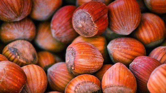 Australia a Possible Goldmine for Hazelnut Production