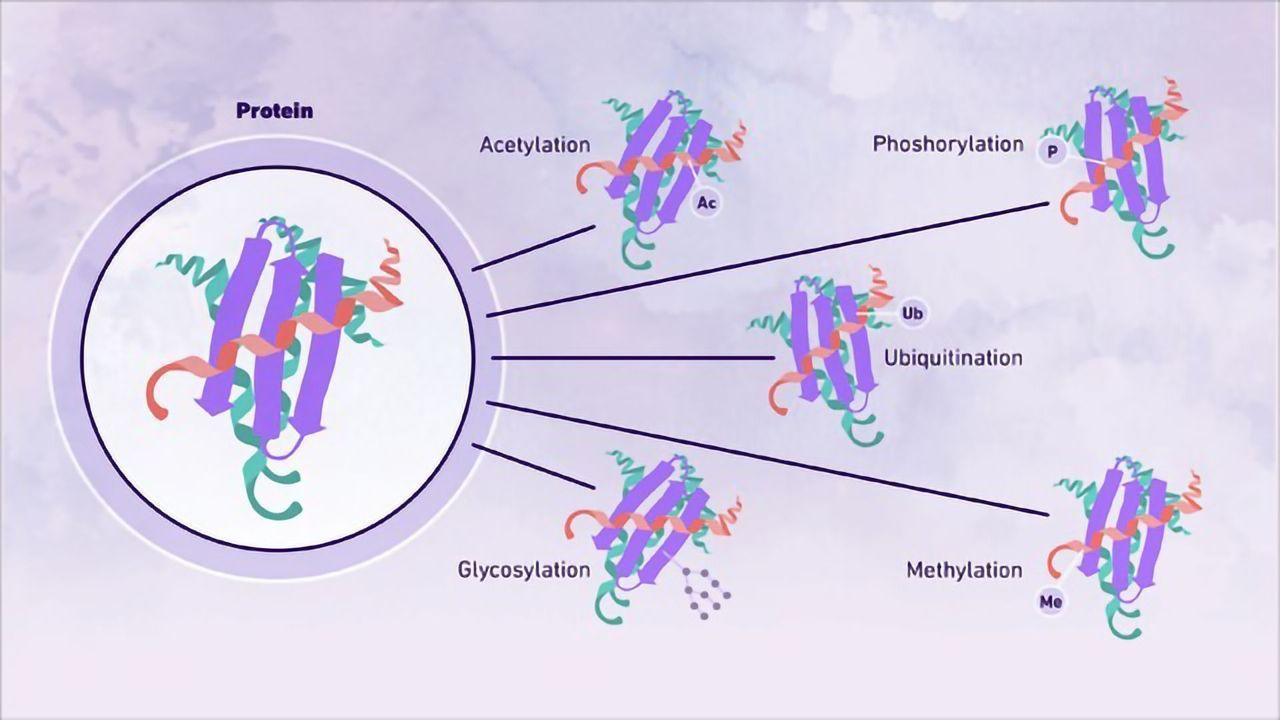 An Introduction to Post-Translational Modifications
