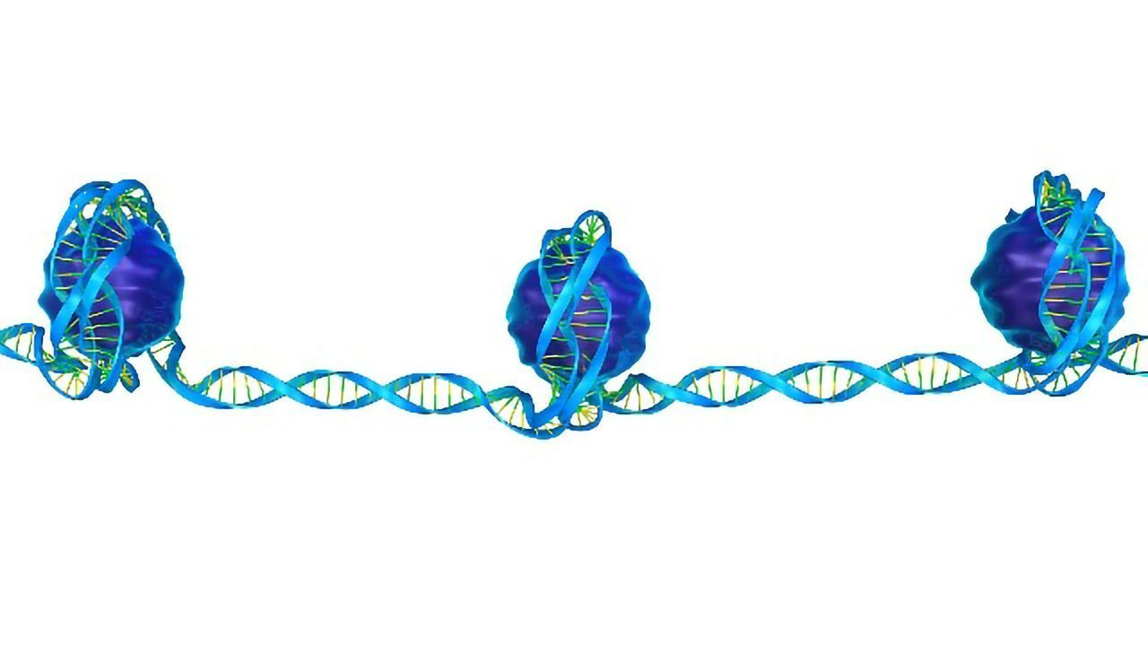 Previously Unknown DNA Modification Discovered in Zebrafish