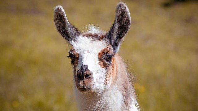 Synthetic Llama Antibodies Prevent Specific Cellular Proteins From Being Destroyed