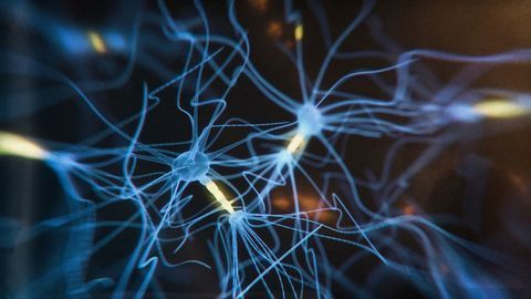 Astrocytes in the Prefrontal Cortex Help With Decision Making