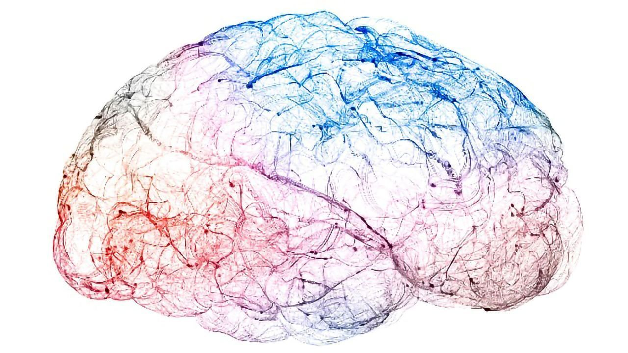 How Our Brain Separates Fact From Possibility