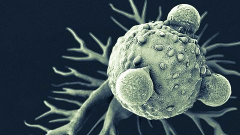 Set of Genes May Be Regulated by Melatonin in Some Types of Tumor