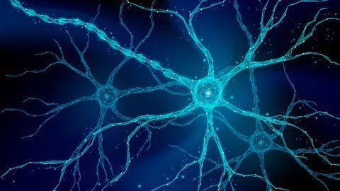 Neural Network Models Predict Epilepsy