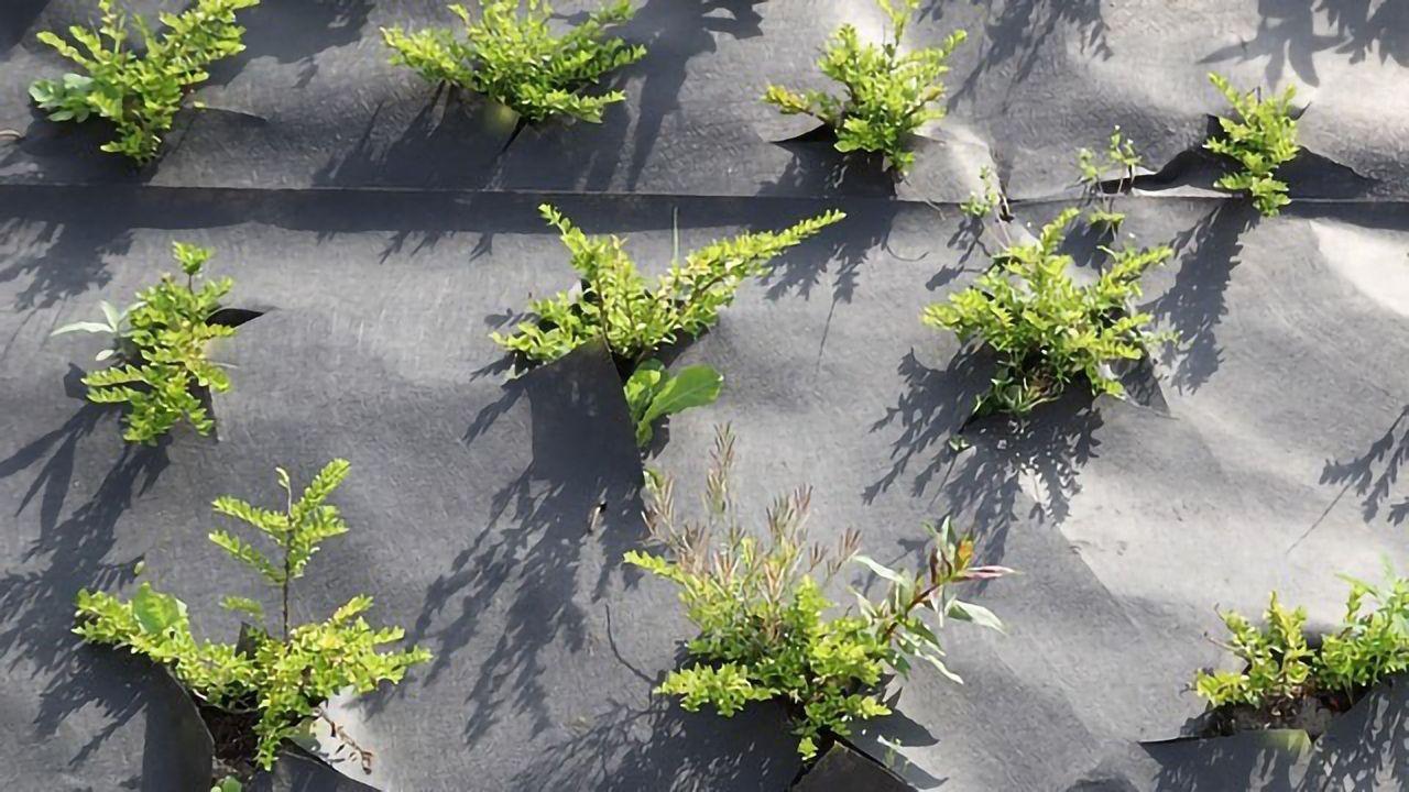 Plastic Mulch on Crops Impacts Pesticide Degradation