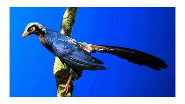 Insights on the Origins of Flight From Archaeopteryx Fossil