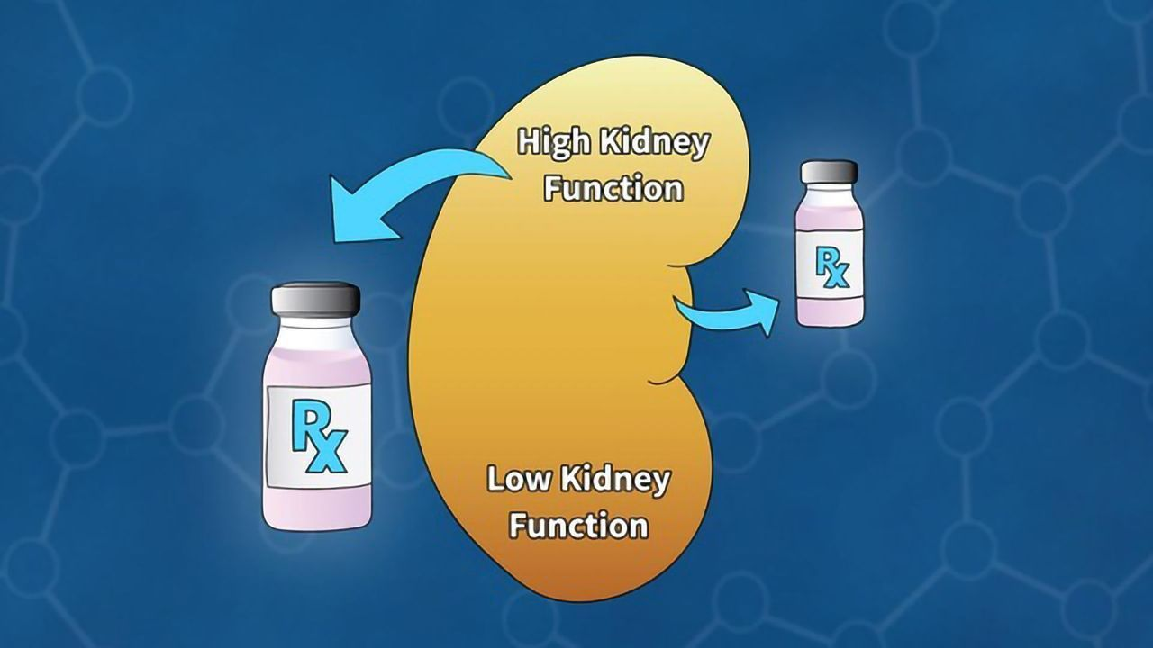 Calibrating the Kidney Function of Cancer Patients