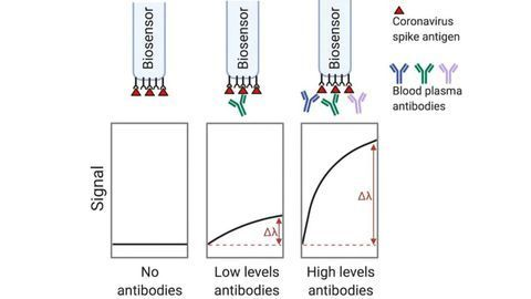 New Serological Assay Provides Rapid, Accurate Testing for SARS-CoV-2 Antibodies