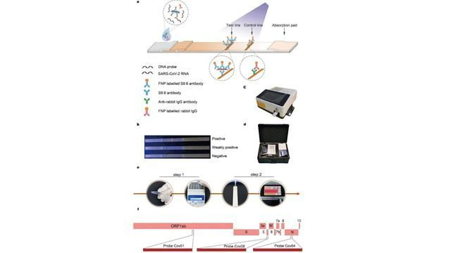Rapid Lateral Flow Immunoassay Developed for Detection of SARS-CoV-2 RNA