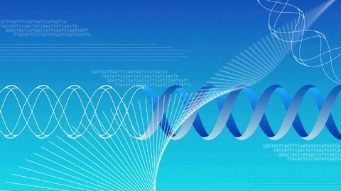 How Decision-Making Genes Govern Cells