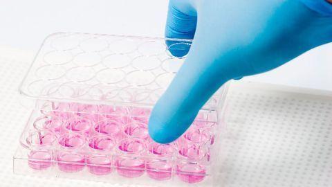 Embryonic Development in a Petri Dish