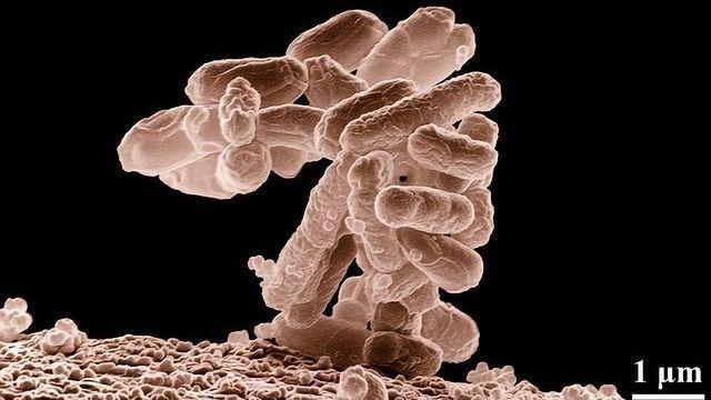How Do Pathogens Sense Their Environment?