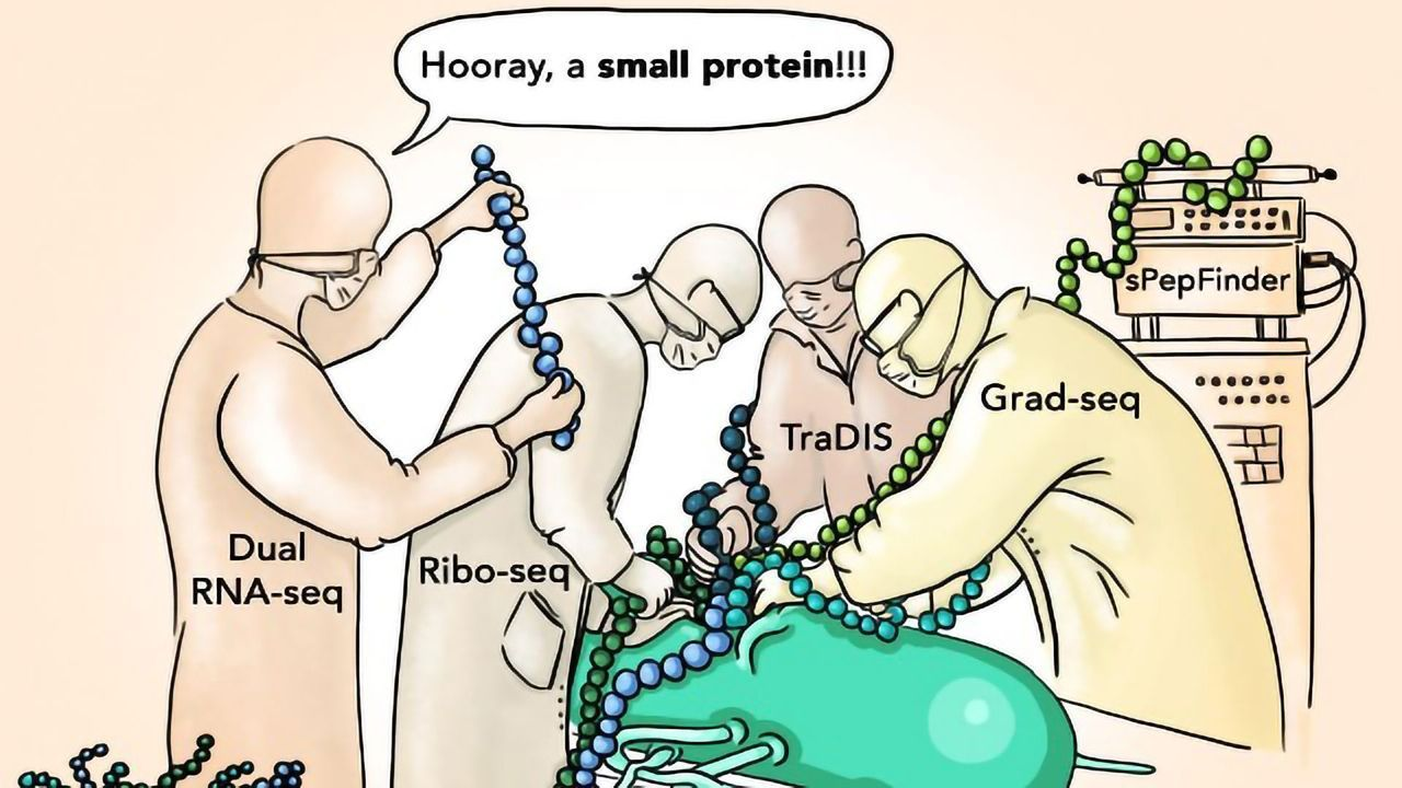 Salmonella Crippled by Loss of Novel Small Protein