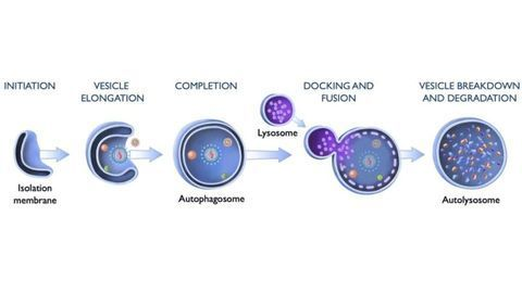 What Gives Cells an Appetite for Viruses?