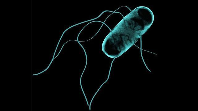 How Salmonella Made the Leap From Gut to Bloodstream