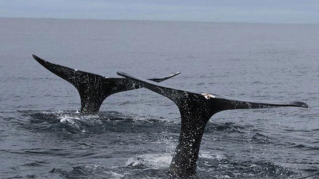 Whale Poop Analysis Reveals Stress Level Indicators