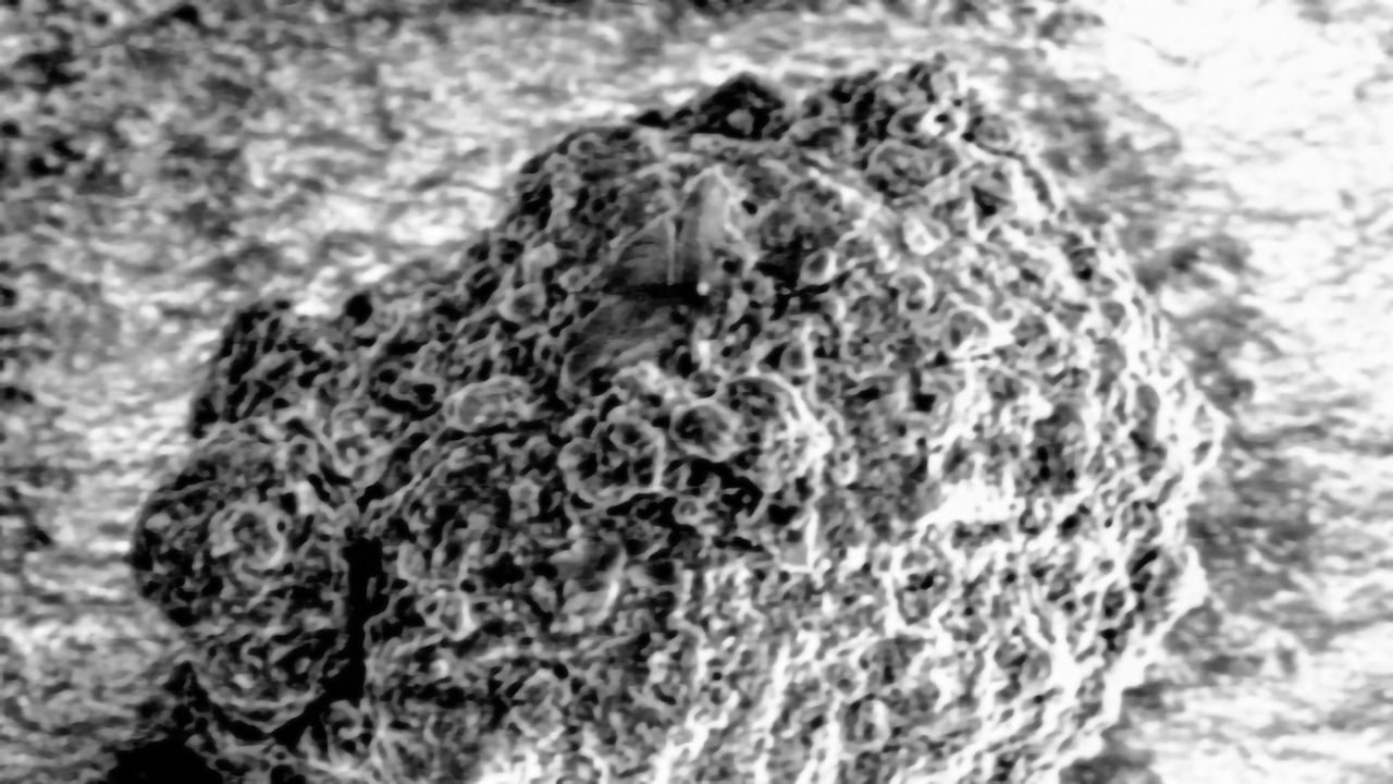 Near Atomic Scale Look at Soil Has Surprising Results