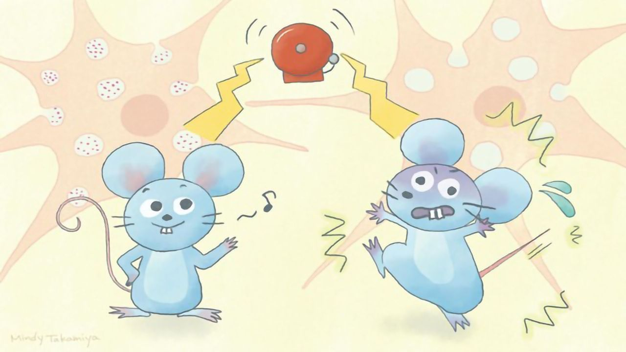 Cholesterol Transport Protein Linked to Schizophrenia in a Mouse Model