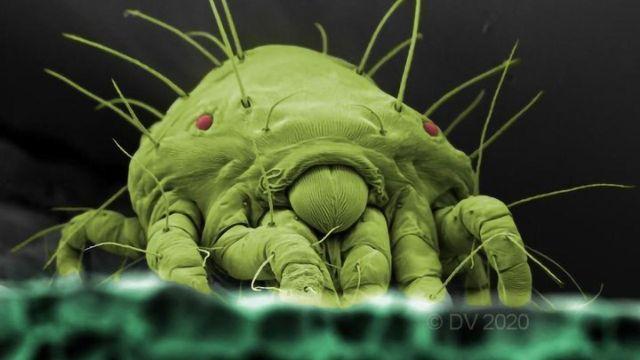 Action of Bio-Pesticide Against Spider Mites Unraveled