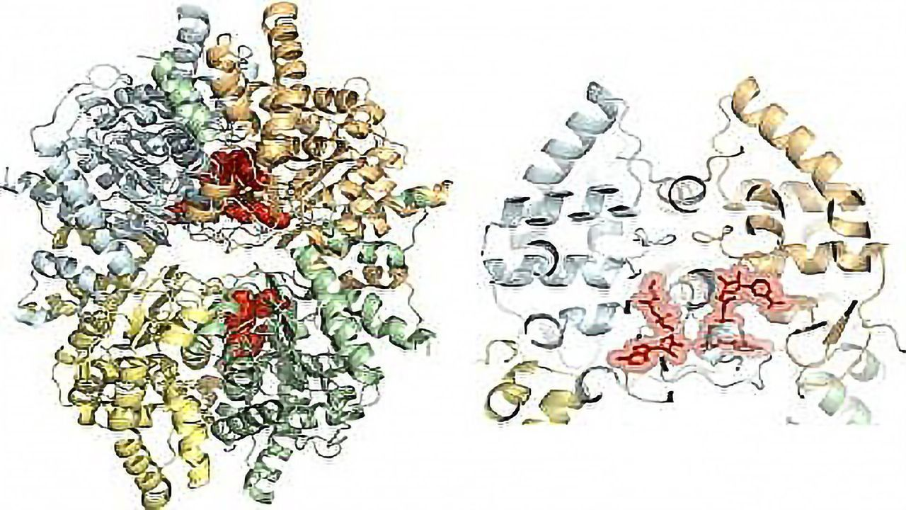 Protein Structure Identification Aids Search for Drugs To Combat Disease