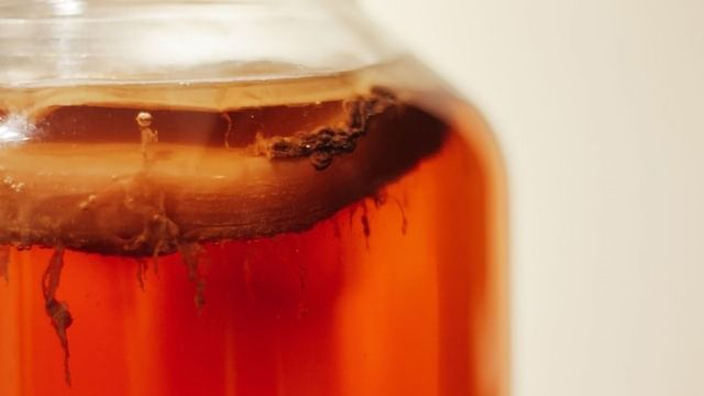 "Kombucha Inspires Creation of a Microbial ""Living Material"""