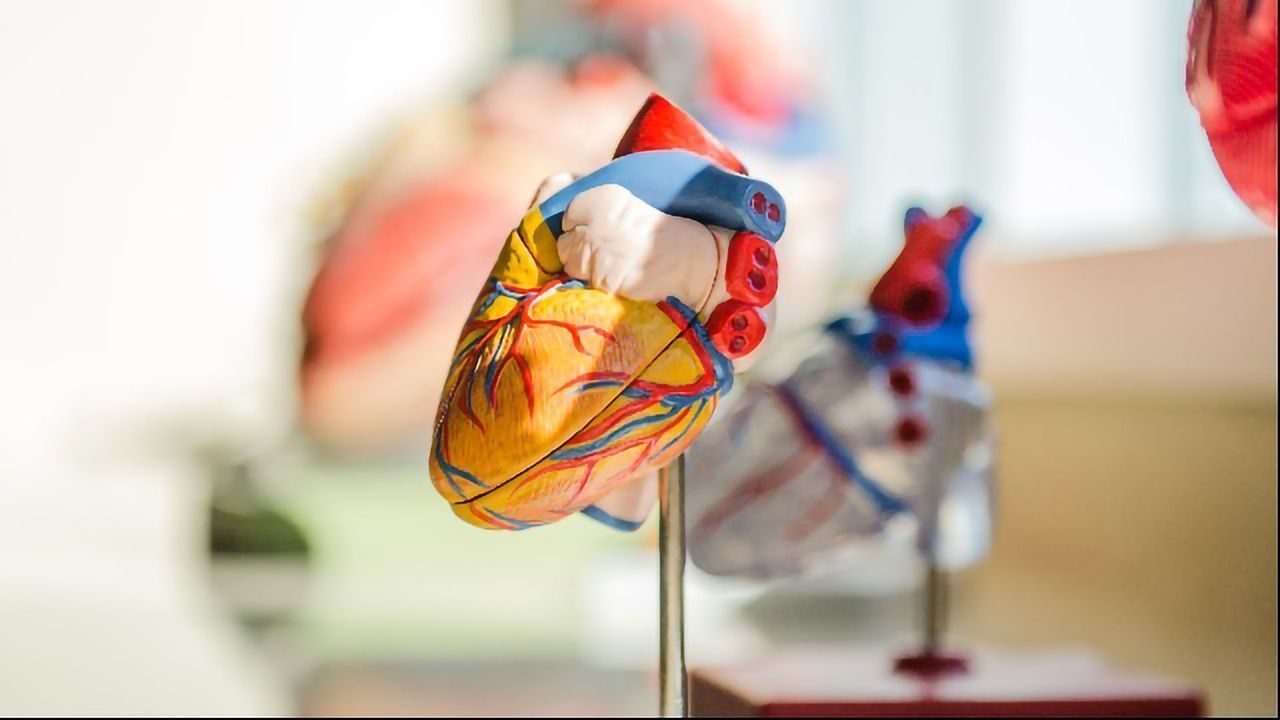 Study Reveals How Cardiac Stem Cells Replenish Damaged Tissues