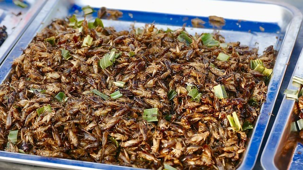 Edible Insects Get a Foothold on European Plates