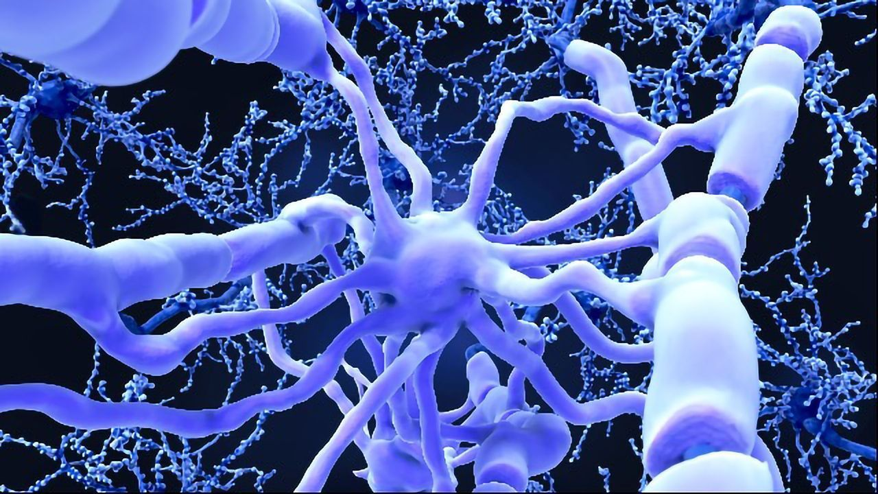 Hormone-Mimicking Compound Shows Promise in Myelin Repair
