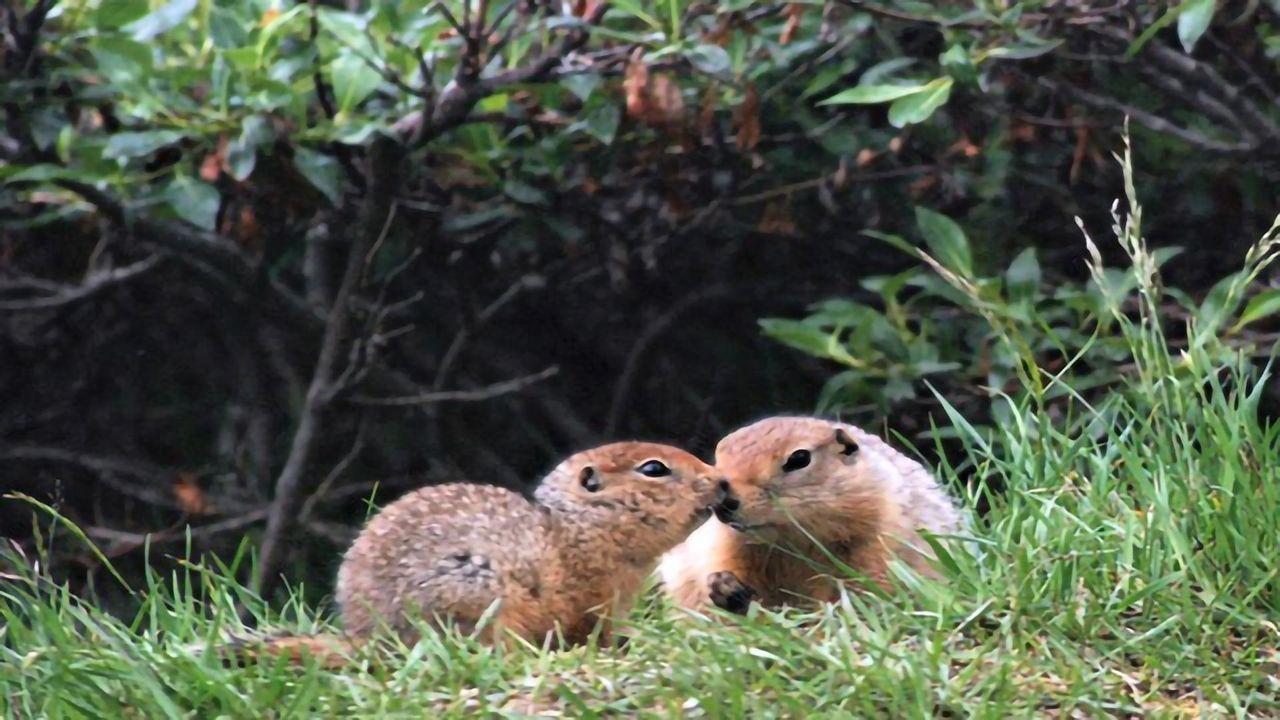Omega-3 Fat Helps Hibernating Ground Squirrels To Keep Warm
