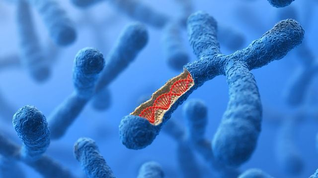 Reverse Engineering Highly Detailed Models of Chromosomes