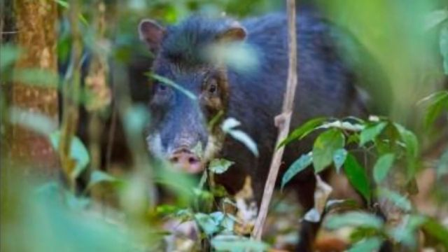 Large Mammals Essential for Soil Health