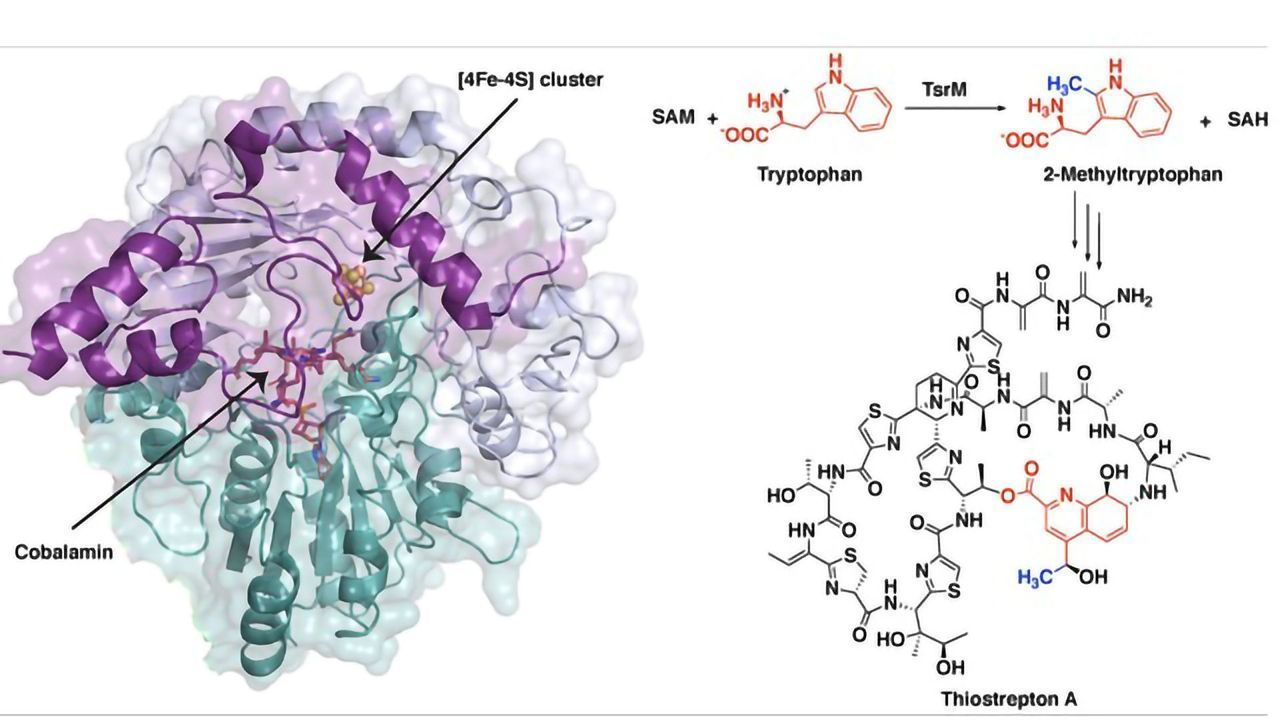 Synthesis of Potent Antibiotic Involves Unusual First Steps
