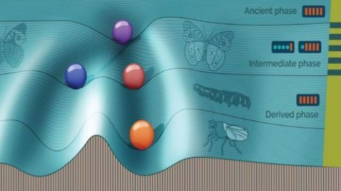 Simulating Evolution To Understand Phenotypic Switching
