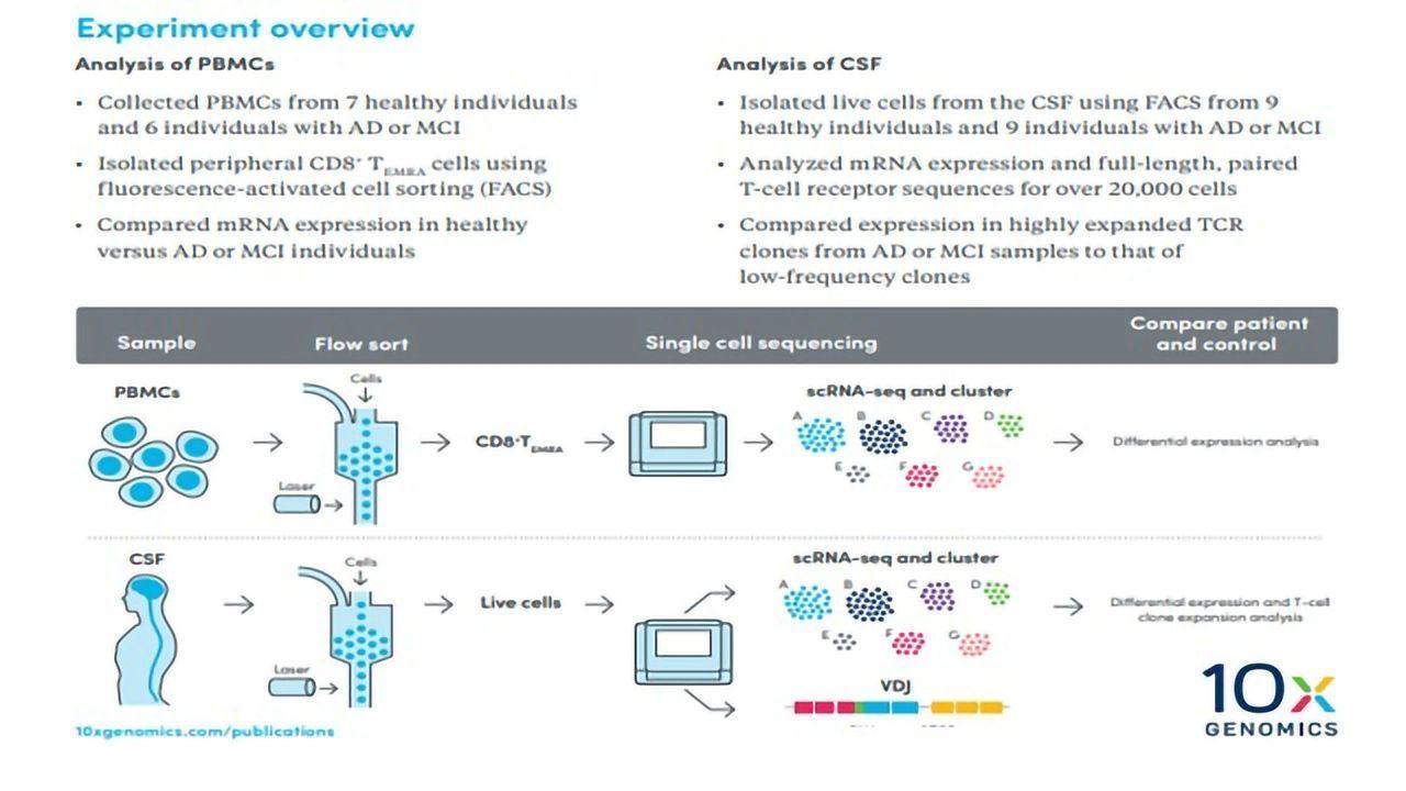 Illuminating the Role of the Adaptive Immune Response in Neurodegeneration