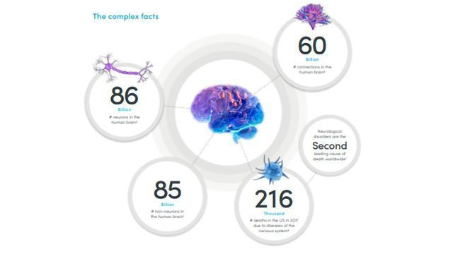 Explore the Complexity of The Nervous System