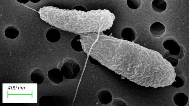 """Dormancy Key to """"Tummy Bug"""" Bacteria's Success"""